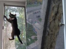 москитная секта на окно обычное полотно